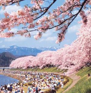 春の桜の景色